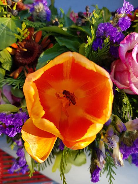 Biene im Totenkranz.